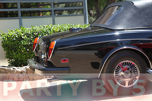Ty Auction Bently 1