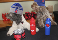 The Olate Dogs To Perform Live – Olate Dogs to Perform Live at The L.A. CLIPPERS HALFTIME on December 21st at Staples Center